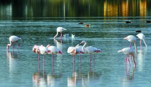 Manyas Kuş Cenneti Çok Farklı Türlere Ev Sahipliği Yapar