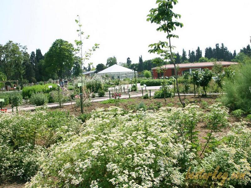 Zeytinburnu Tıbbi Bitkiler Bahçesi