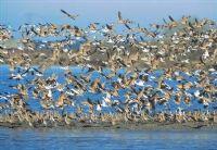 Yedi Kuğular Kuş Cenneti