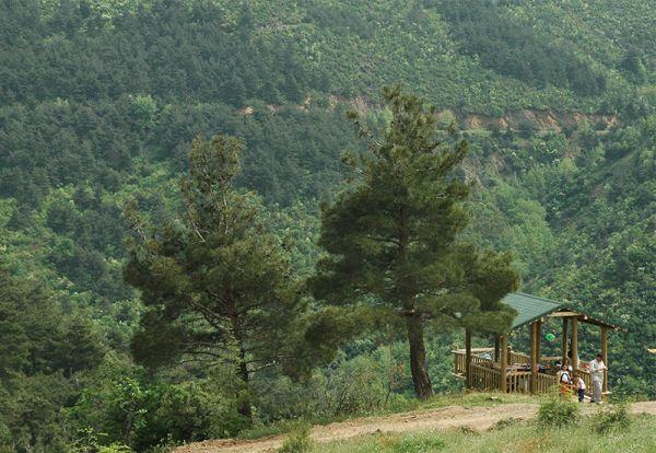 Atatürk Kent Ormanı