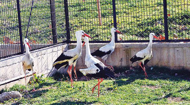 Karacabey Ovakorusu'ndaki Celal Acar Yaban Hayvanı Kurtarma Merkezi