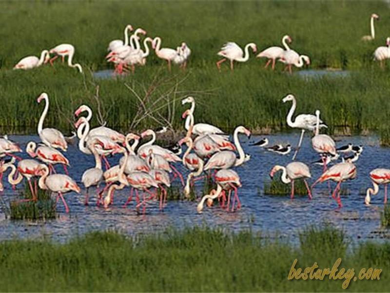 Kuş Cenneti Farklı Kuş Türleri ve Bitki Türlerine Ev Sahipliği Yapıyor