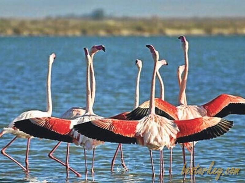 Kuşların Cenneti, Manyas Kuş Cenneti Milli Parkı