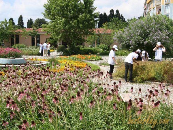 Zeytinburnu Tıbbi Bitkiler Bahçesi Çok Güzel Görüntüsü