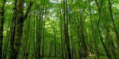 İğneada Bulanık Meşe Ormanları