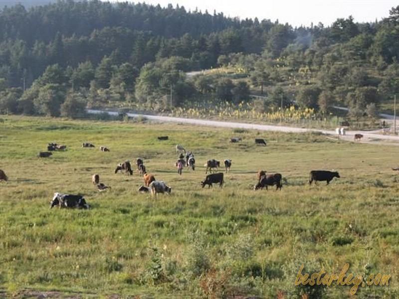 Abant'tan hayvan türlerinin görüntüleri